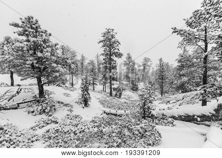 Heavy winter snowfall in progress at Bryce Canyon National Park in black and white.