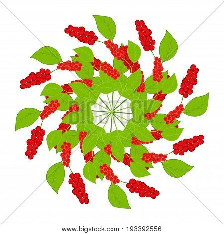 Branch, berries of Chinese Schisandra, in color, isolated. One of the best adaptogen herbs for stress relief. Circular pattern, mandala, pattern for design of scarf, textiles, wallpaper, decoupage.