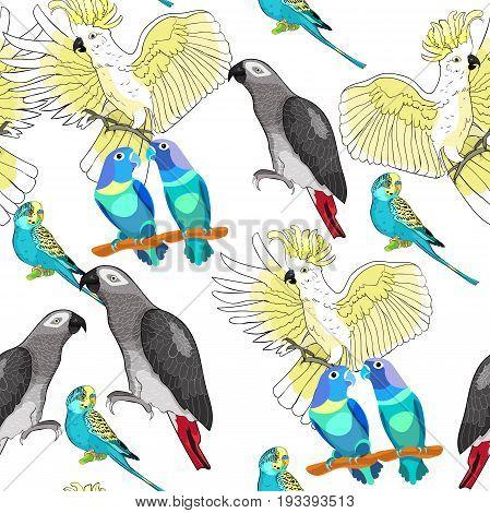 Seamless pattern with Jaco Lovebird wavy parrot kakadu Vector illustration