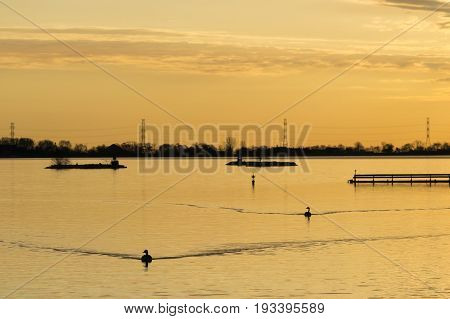 Golden Sunrise Tranquil Scene Of Two Birds Dirfting Calmly On A Golden Lake Reflecting The Morning C