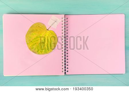 An overhead photo of a herbarium, a spiral notebook with a taped autumn leaf, on a teal background, with a place for text