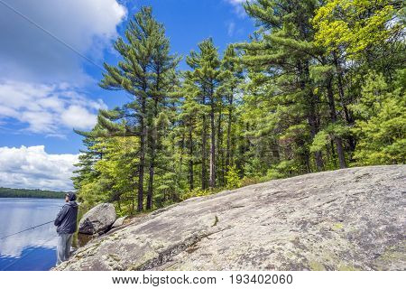 Tall Pine Forest Towering Over Canadian Shield Bedrock Beside Blue Lake Where Man Stands Fishing