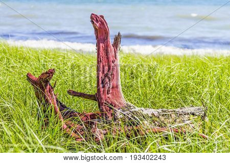 Red Driftwood Log On Long Green Grasses Growing Beside Beach, Blue Waves Crashing