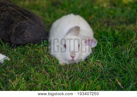 Little Funny Rabbit Running On The Field In Summer