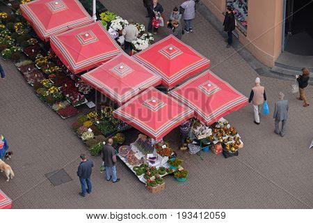 ZAGREB, CROATIA - OCTOBER 16: Flower market downstairs Dolac the main market in Zagreb, Croatia on October 16, 2016.