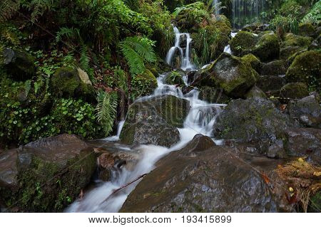 Narrow white stream of water flows between wet stones and lush tropical vegetation. The water running down in several little trickles.