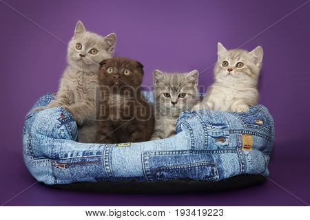 Four kittens in a basket on a lilac background.
