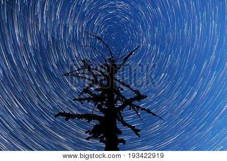 Milky Way. Falling Stars. Dead Tree Silhouette. Timelapse