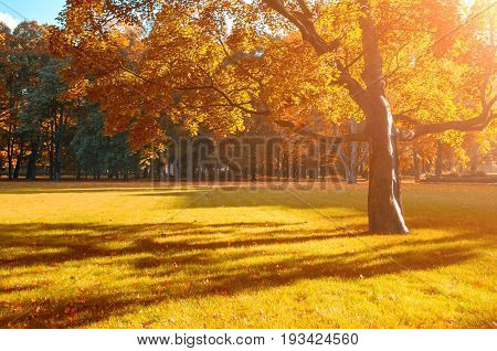 Autumn beautiful landscape - sunny autumn colorful park lit by sunshine. Autumn park with golden autumn trees in sunny autumn evening -autumn picturesque landscape with deciduous autumn yellowed tree in autumn park