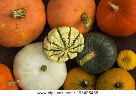 Assortment of seasonal autumn pumpkins and squash decoration for holiday decor background from above