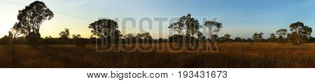 Biome Savanna sunset time with Panoramic scene at Tropical Deciduous Forest. Koh Pratong Marine Nationalpark. Phangnga Province. Thailand