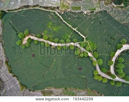 Aerial photography at Spring mountain tea garden landscape with winding road