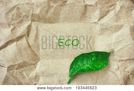 Crumpled sheet of beige paper wet green leaf space with the inscription