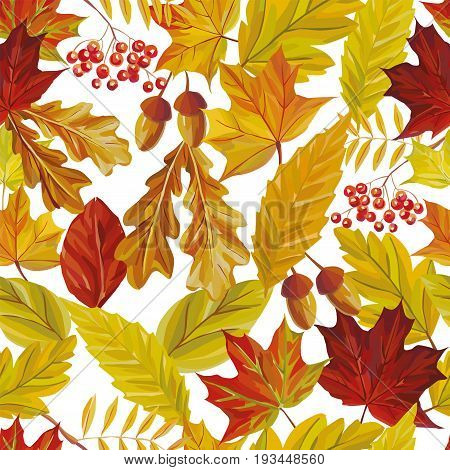 Vector autumn composition of rowan acorn and red yellow leaves of oak maple birch. Seamless pattern nature white background