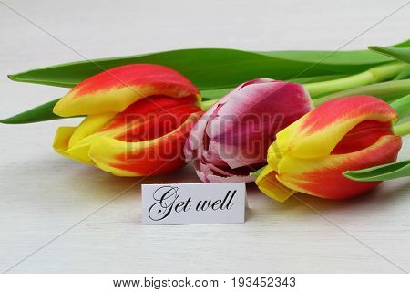 Get well card with tree colorful tulips