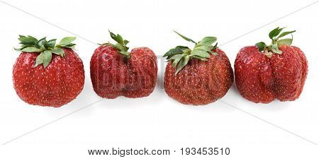Imperfect organic ripe heirloom strawberries isolated closeup