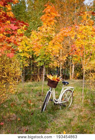 White retro style bicycle with basket with orange, yellow and green leaves, parked in the colorful fall park among trees, vertical background
