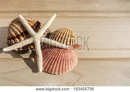 Bright Wooden Background With A Collection Of Sea Shells At The Side, Yellow, Pink, White And Broun