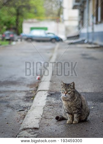 Lonely Cat On The Street