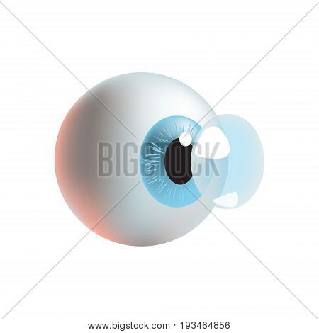Vector illustration with photo realistic eye and applying contacts lens