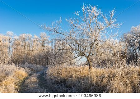 Fall landscape with earth road through the lands covered with hoar-frost