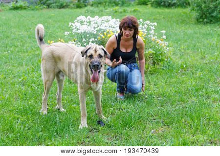 Woman with a Spanish mastiff in a summer garden