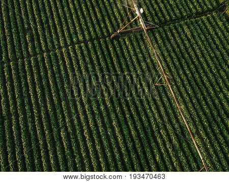 Aerial view of irrigation equipment watering green soybean crops field in summer afternoon drone point of view for unusual angle for agricultural activity