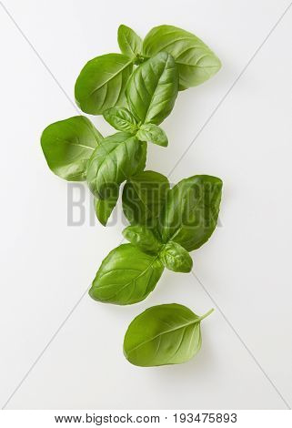 Freshly picked bunch of basil. Bunch of fresh basil against a white background.