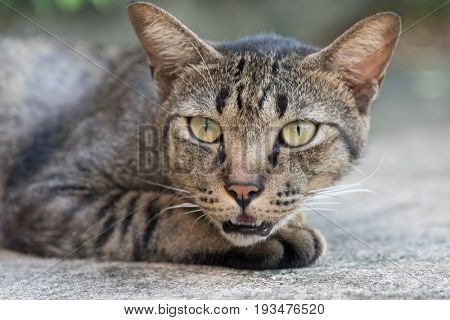 Closeup of beautiful gray striped cat outdoors