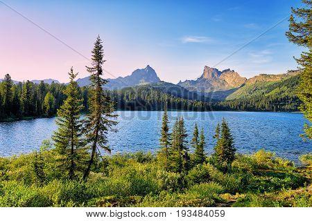 Small Fir Trees Against Background Of Lake Svetloye