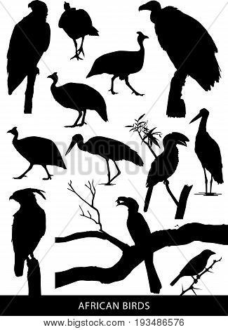 Black and white vector silhouettes of a variety of African birds and raptors
