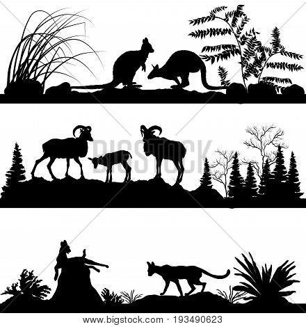Vector set of wild animals. Kangaroos, sheep, wild cats in different habitats, wildlife concept