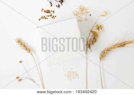 Mock up of paper square box with dry ears of rye wheat and oats on white background. Top view.