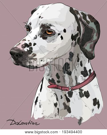 Coloful hand drawing vector portrait of dalmatian dog in profile on pink background