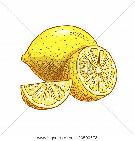 Lemon fruit sketch icons. Vector isolated symbol of fresh whole and cut sliced citrus lemons fruits for jam and juice drink product label or grocery store and farm market design