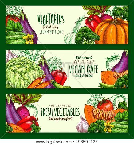 Vegetarian cafe banners of fresh organic vegan vegetables. Vector pumpkin, chinese napa cabbage and patisony zucchini squash, carrot, tomato, cucumber or potato, natural radish, celery or cauliflower