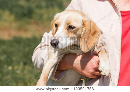 Woman Holding Funny, Happy Dog In Her Hands Outdoors, Animal Adoption Center Concept