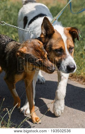 Two Dog Friends On A Walk In The Park, Animal Shelter Concept