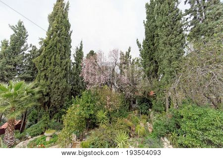 Jerusalem, Israel. - February 15.2017. Church of St. Mary Magdalene. View of the well-groomed territory. Blossoms of almonds