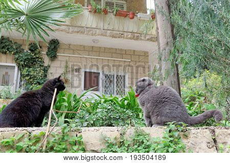 Jerusalem, Israel. - February 15.2017. Church of St Mary Magdalene Two local cats swear