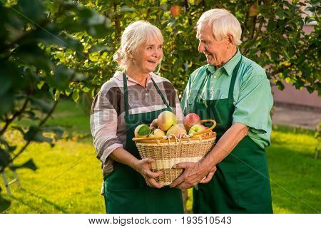Happy couple holding apple basket. Man and woman standing outdoors. Trust and help.