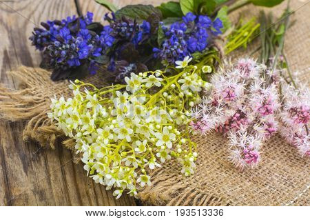 Flowering ground cover plants on wooden background. Studio Photo