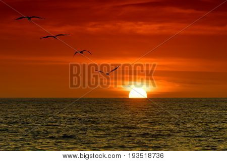 Four pelicans flying over the ocean in sunset.