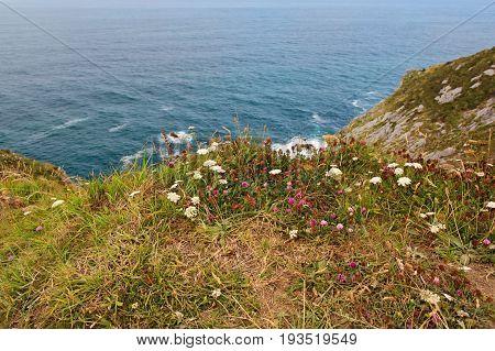 Green plants on the ocean coast. A grass on high break on the ocean coast selective focus
