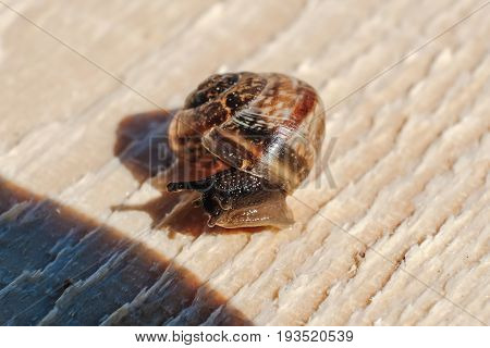 the little snail on the Board slowly creeping