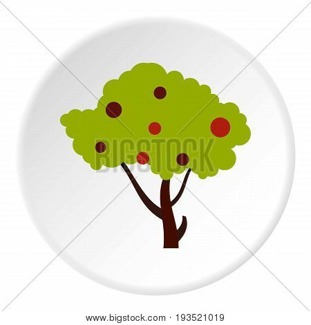 Tall tree with fruits icon in flat circle isolated vector illustration for web