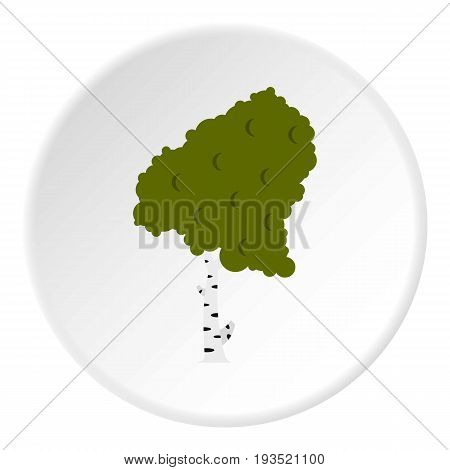 Wood birch icon in flat circle isolated vector illustration for web