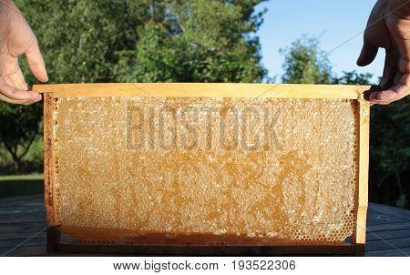 Beekeeping and honeycomb close up image .