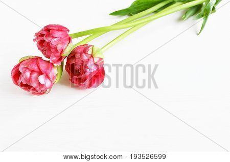 bouquet of three spring pink terry tulips, white wooden background, copy space