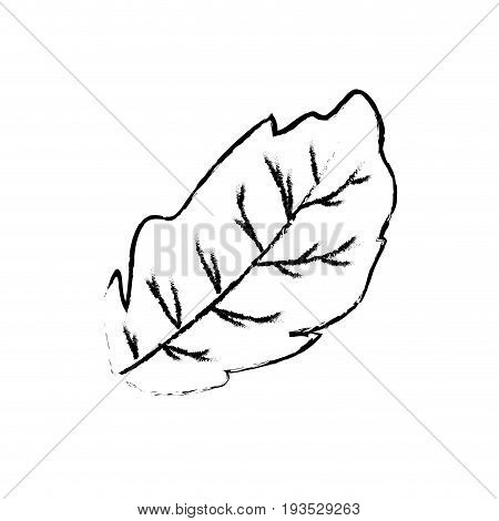 figure peppermint leaf plant and natural condiment vector illustration